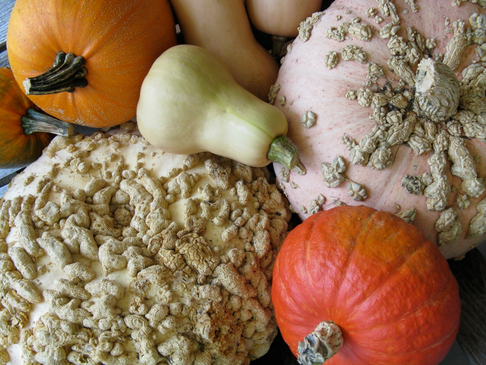 a variety of winter squash