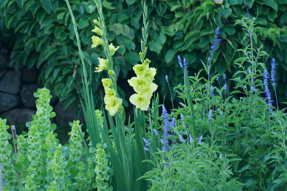 August Flower Garden
