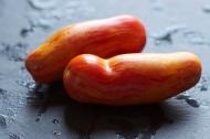 Casady's Folly Tomatoes