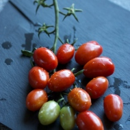 Honey Bunch Red Grape Tomatoes