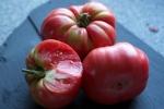 Tiffen Mennonite Tomatoes
