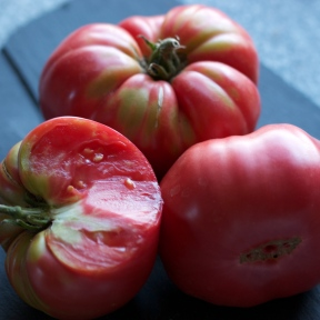 Tiffen Mennonite Tomatoes