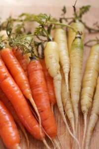 over-wintered carrots in spring