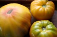Old German Striped Tomato