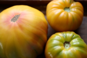 Old German Striped Tomato