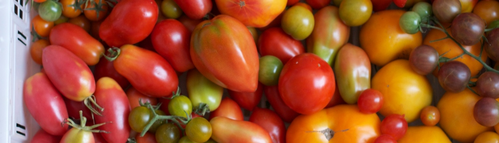 Tomatoes of Many Varieties
