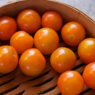 Gajo de Melon Cherry Tomatoes