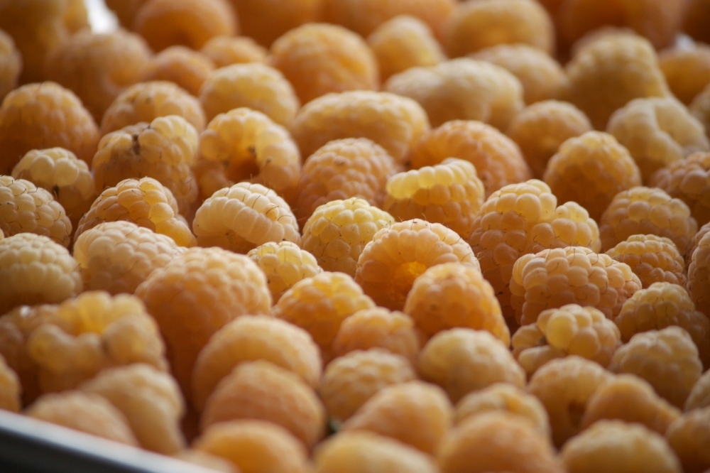 Golden Anna Raspberries