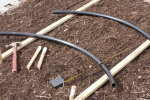 Laying out stakes and PVC hoops
